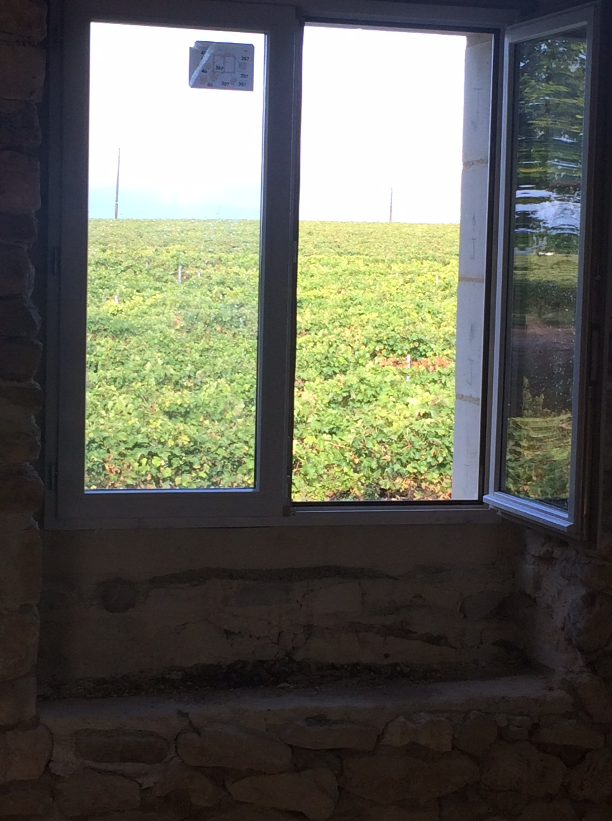 Room with a vine view.